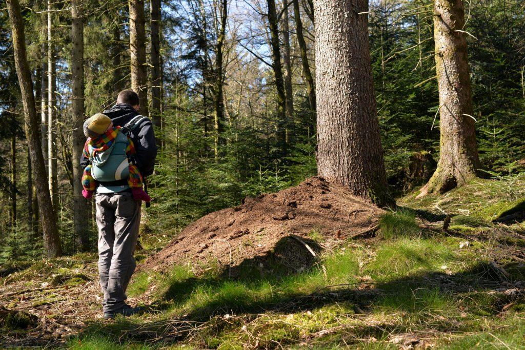 trekking in the nearby woods